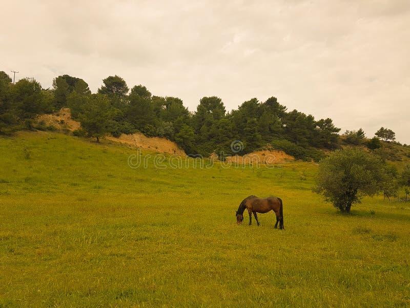 Bruin paard die hooi en gras eten bij een weide royalty-vrije stock foto's