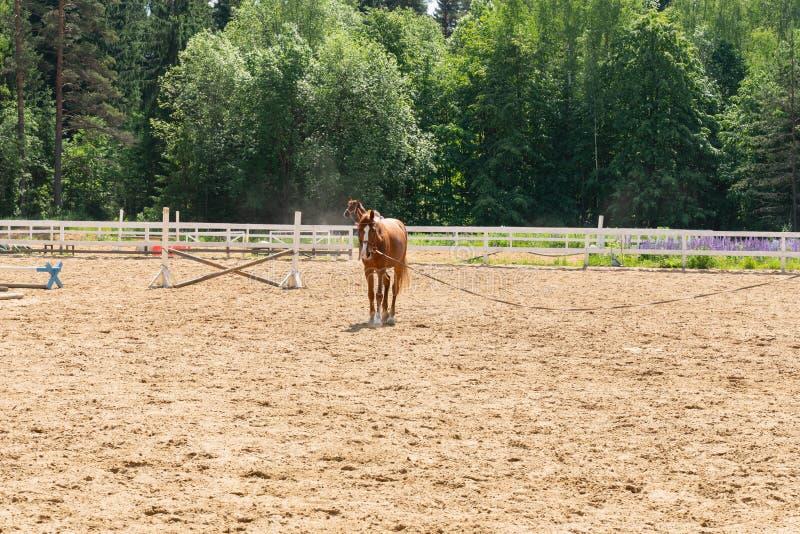 Bruin paard die op een geschermd gebied op een achtergrond van groene bomen lopen royalty-vrije stock foto