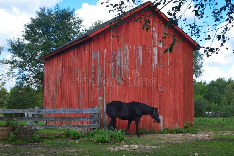 Bruin Paard door Rode Houten Schuur met Omheining stock fotografie