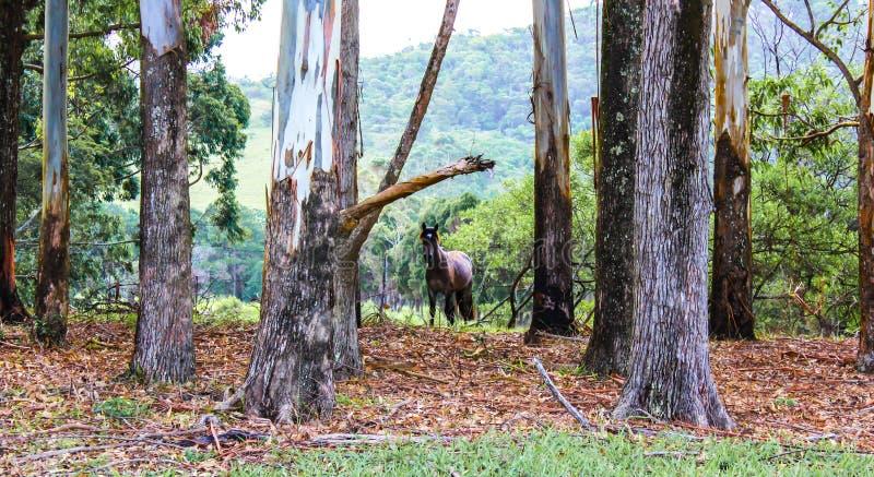 Bruin paard in het bos in de herfst stock fotografie
