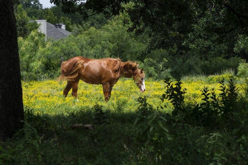 Bruin Paard met Witte die Snuit door Bomen wordt ontworpen stock afbeelding