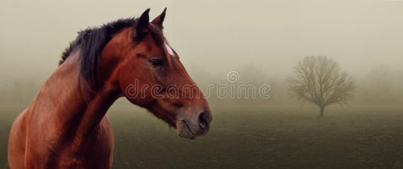 Bruin paard in mist royalty-vrije stock fotografie