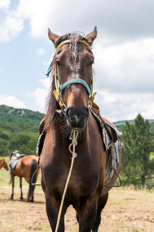 Bruin paard - verticaal beeld stock afbeeldingen