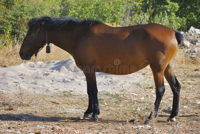 Bruin paard in weiland royalty-vrije stock foto