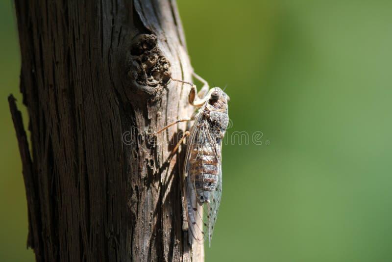 Bruin Vliegend Insect die op Bruine Boomstam tijdens Dag neerstrijken royalty-vrije stock foto's