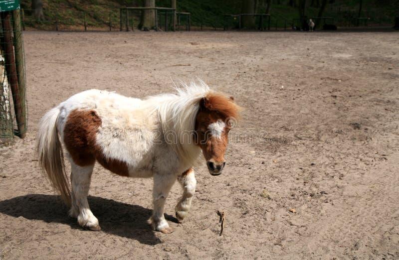 Bruin-wit paard (poney) royalty-vrije stock afbeeldingen