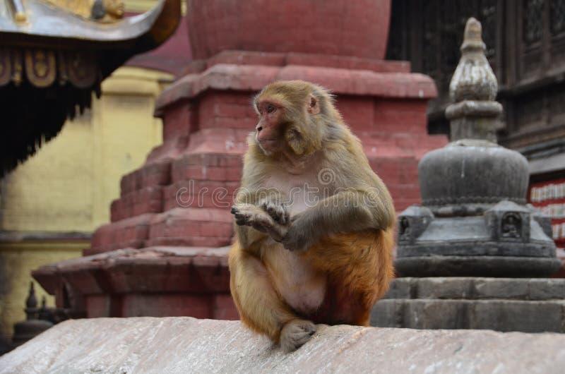 Bruine aap zit op de cement royalty-vrije stock afbeeldingen