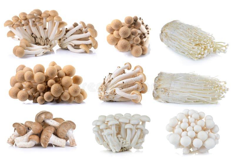 Bruine beukpaddestoel, Witte beukpaddestoelen, Shiitake-paddestoel royalty-vrije stock fotografie