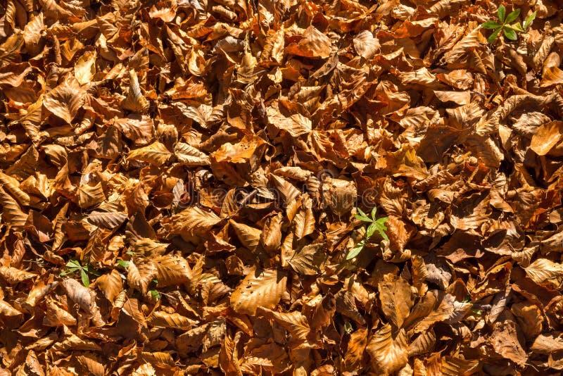 Bruine bladeren royalty-vrije stock afbeelding