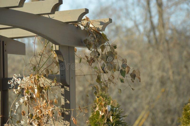 Bruine bladeren op de portiek in de herfst royalty-vrije stock foto