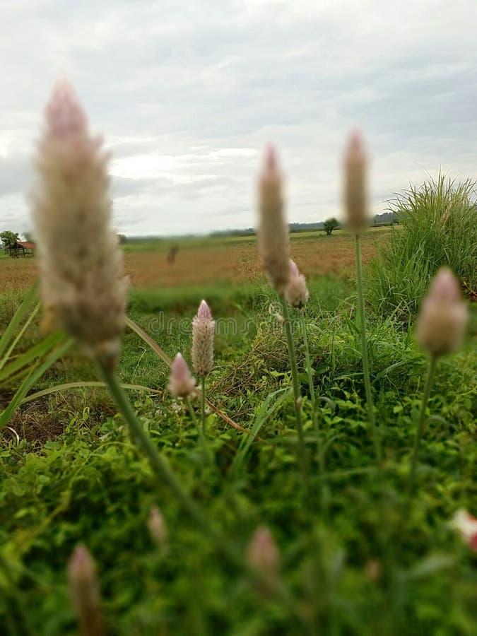 Bruine bloem stock foto's