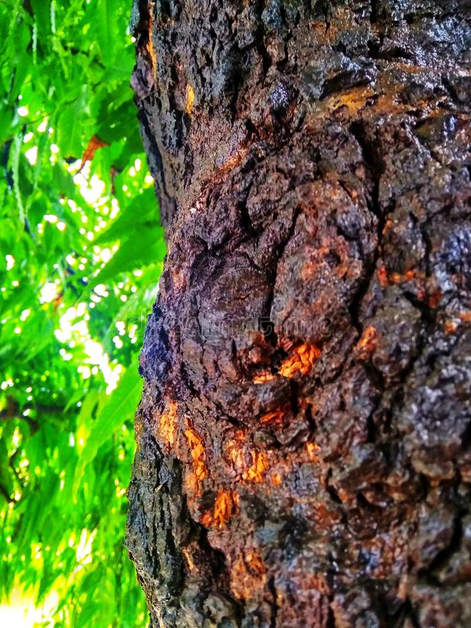 Bruine boomboomstam van regenachtig seizoen stock foto