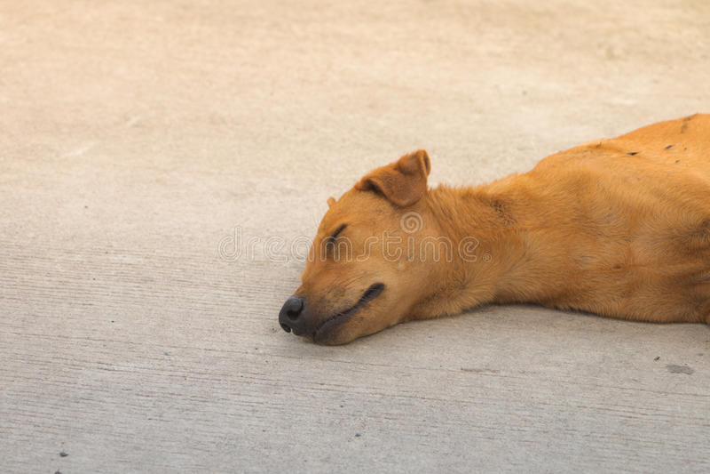 Bruine dakloze hond stock fotografie