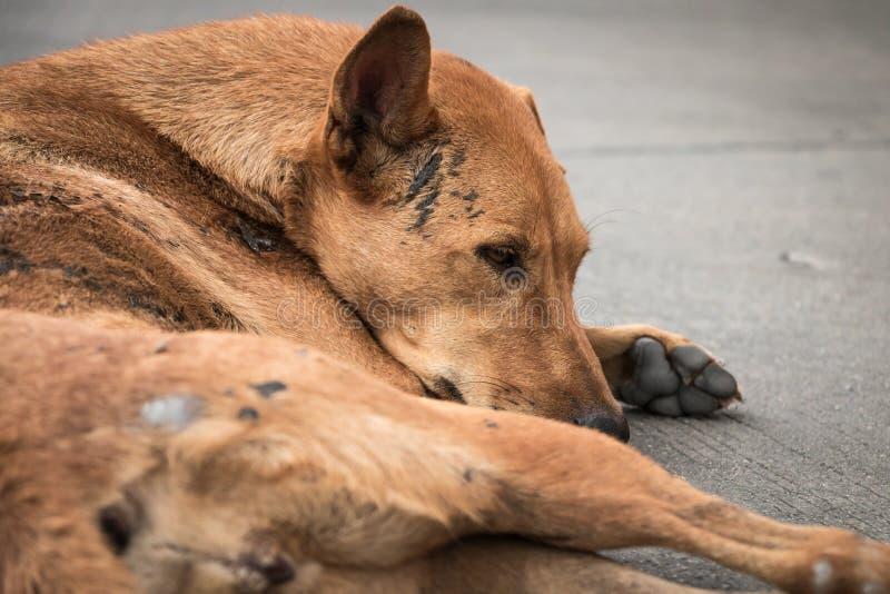 Bruine dakloze Thaise hond op de straat stock foto
