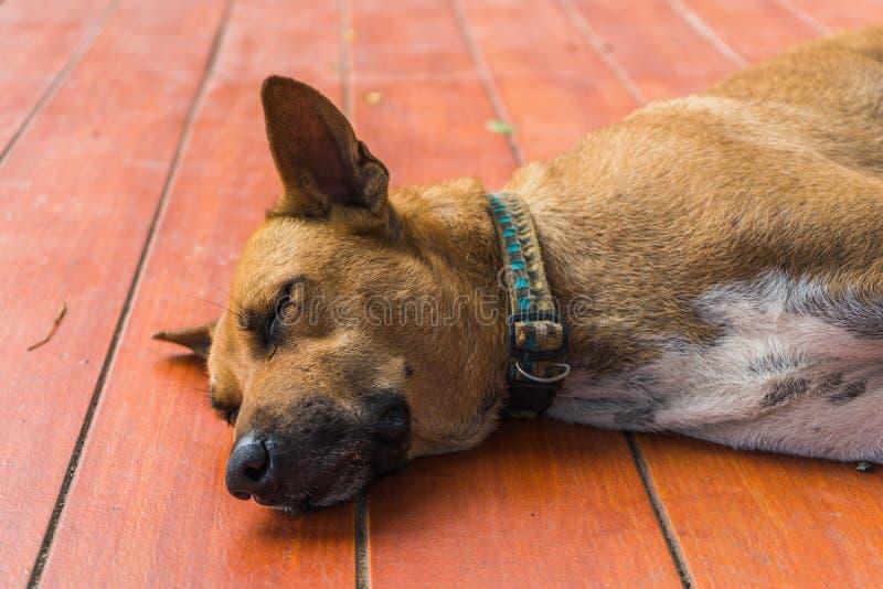 Bruine dakloze Thaise hondslaap op de vloer stock fotografie