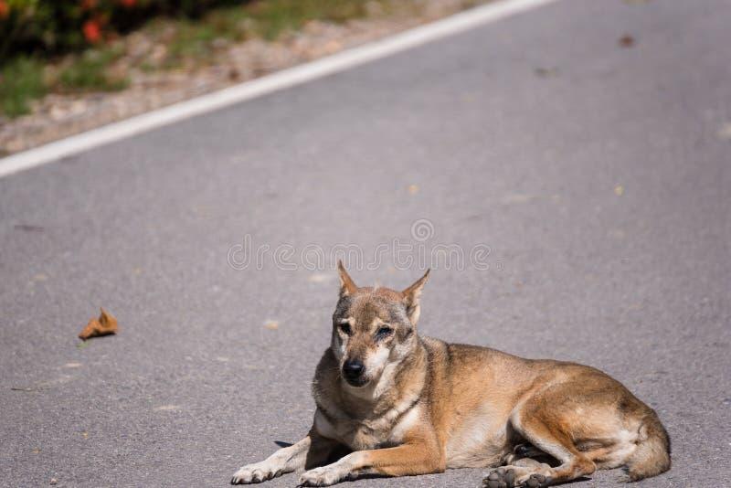 Bruine dakloze Thaise hondslaap op de zijstraat stock afbeeldingen
