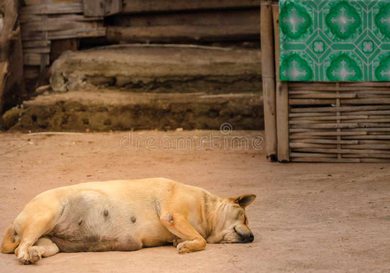 Bruine dakloze Thaise hondslaap op de zijstraat stock fotografie