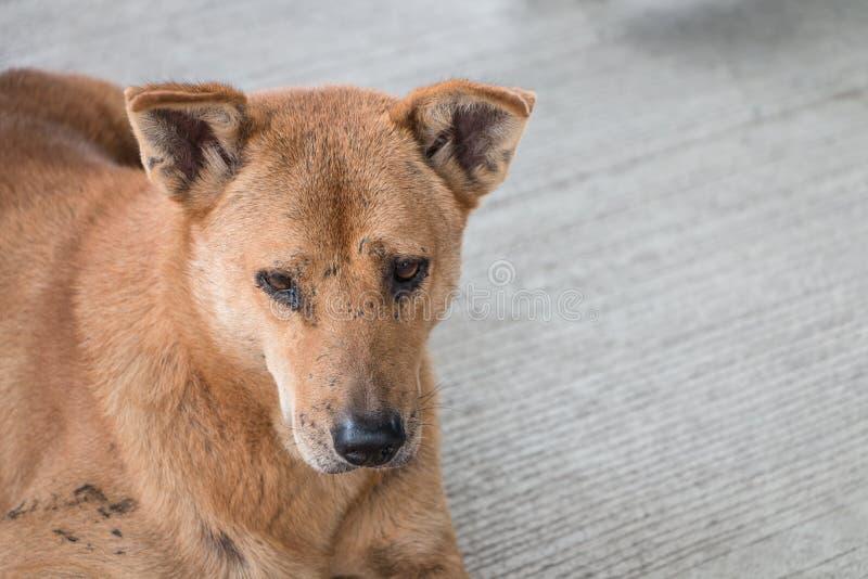 Bruine dakloze vuile hond royalty-vrije stock fotografie
