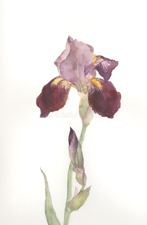 Bruine de waterverftekening van de irisbloem vector illustratie