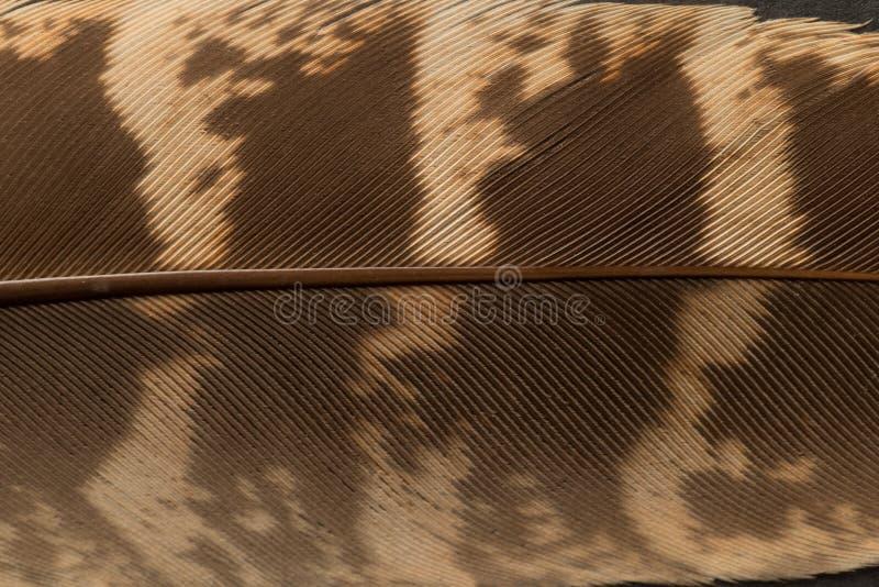 Bruine dichte omhooggaand van de Fazantveer stock foto's