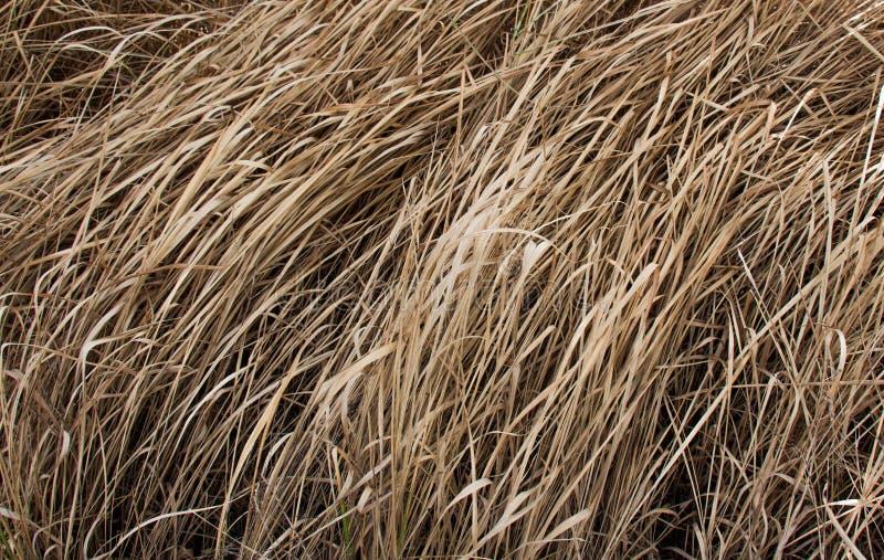Bruine droge grassen in zomer royalty-vrije stock afbeeldingen