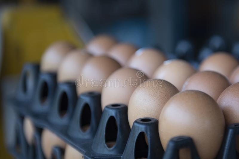 Bruine eieren in een zwart paneel royalty-vrije stock afbeeldingen