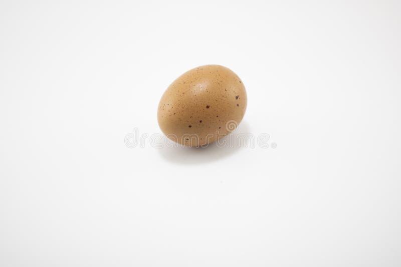 Bruine eieren Gefilmd in studio op witte achtergrond royalty-vrije stock foto
