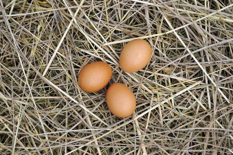 Bruine eieren in houten kom stock fotografie