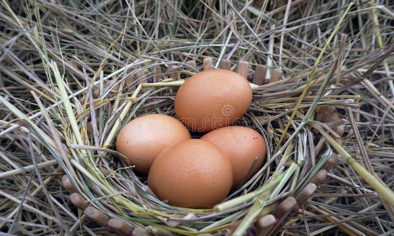 Bruine eieren in houten kom royalty-vrije stock foto's