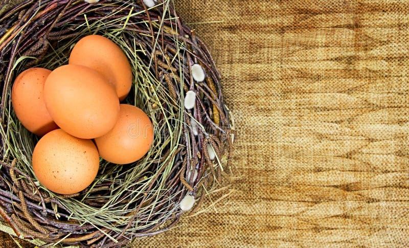 Bruine eieren in nest op achtergrond met lege ruimte royalty-vrije stock foto