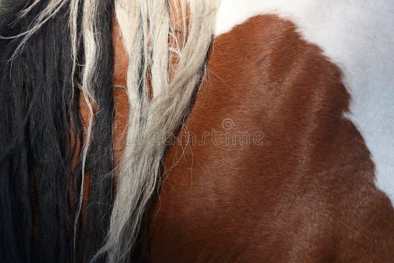 Bruine en witte dichte omhooggaand van paardmanen royalty-vrije stock fotografie