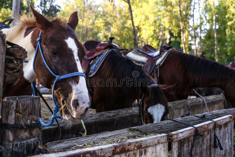Bruine en witte paarden op de achtergrond van de bomen royalty-vrije stock foto's