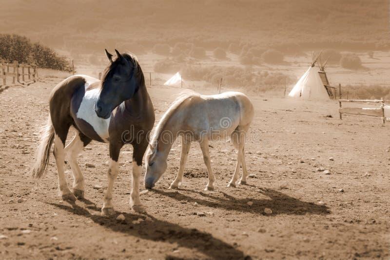 Bruine en witte verfpaarden stock afbeeldingen