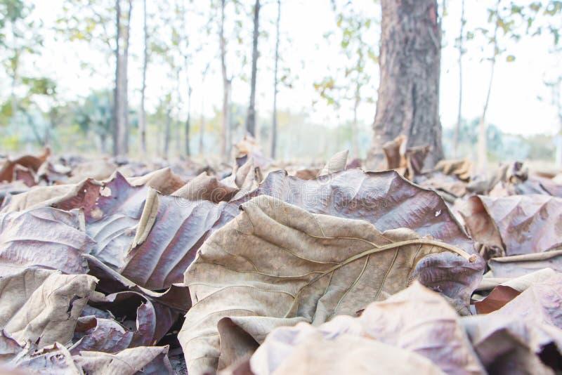 Bruine gevallen bladeren royalty-vrije stock foto's