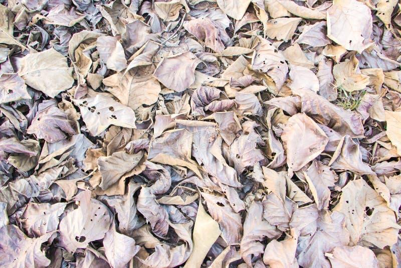Bruine gevallen bladeren stock fotografie