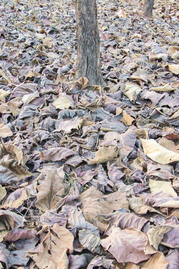 Bruine gevallen bladeren stock foto