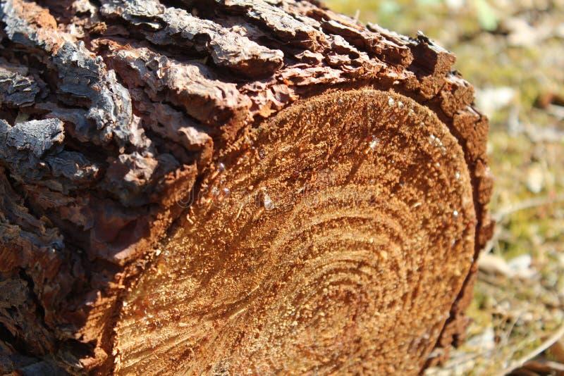 Bruine geweven boomstam Portugal Trà ¡ s os Montes royalty-vrije stock foto