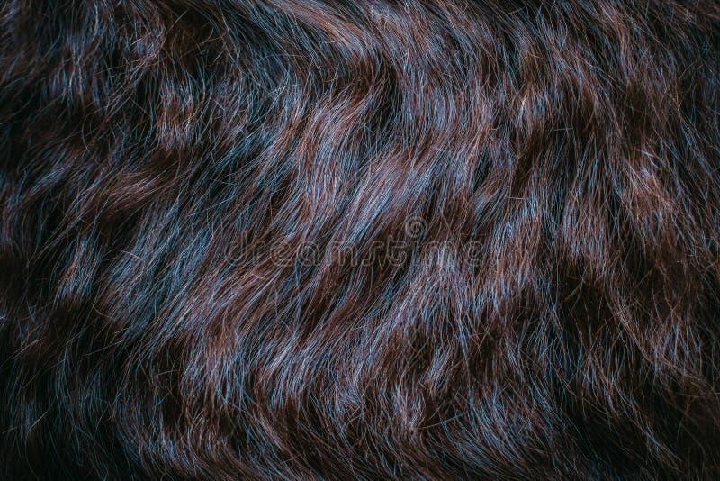 Bruine haar dichte omhooggaand texturen en achtergrond royalty-vrije stock afbeelding