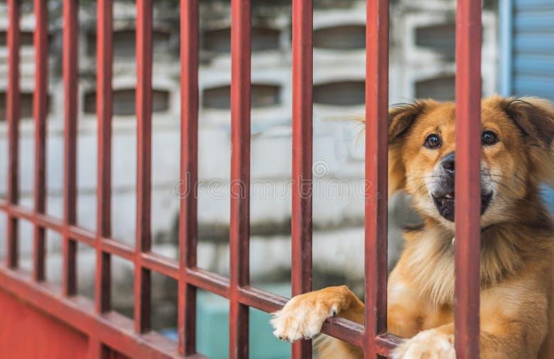 bruine hond achter de omheining royalty-vrije stock foto's