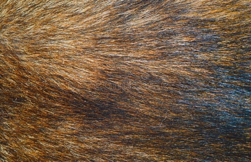 Bruine hondenbonttextuur of achtergrond royalty-vrije stock afbeeldingen