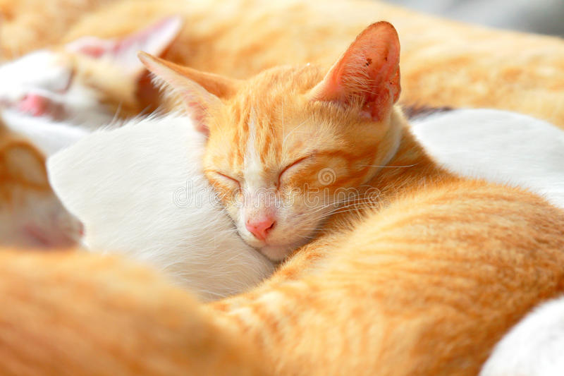 Bruine kattenslaap stock afbeelding