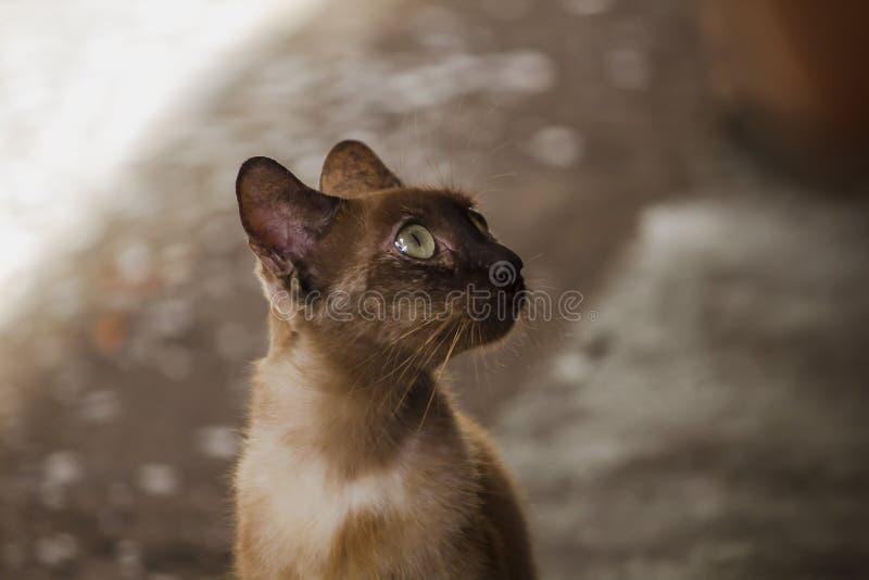 Bruine kattenzitting op de vloer royalty-vrije stock afbeeldingen