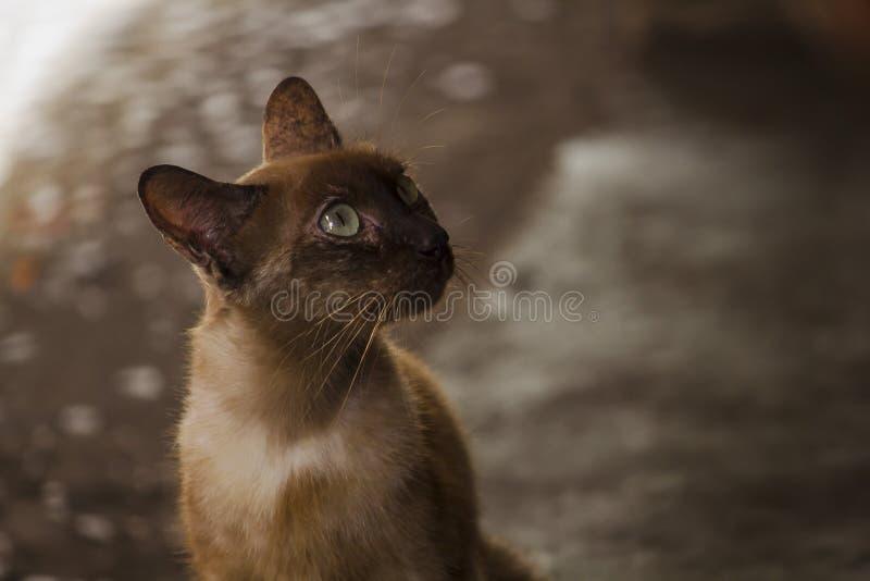 Bruine kattenzitting op de vloer stock afbeeldingen
