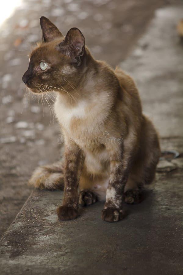 Bruine kattenzitting op de vloer royalty-vrije stock fotografie