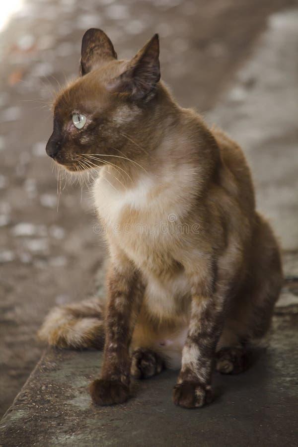 Bruine kattenzitting op de vloer royalty-vrije stock foto's