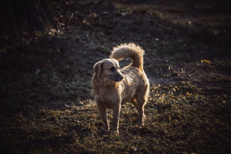 bruine leuke verdwaalde hond op dagtijd royalty-vrije stock afbeeldingen