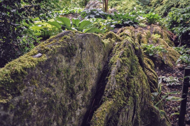 Bruine mos bosrots en één of andere varen stock foto