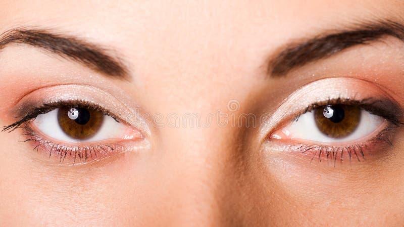 Bruine ogen royalty-vrije stock fotografie