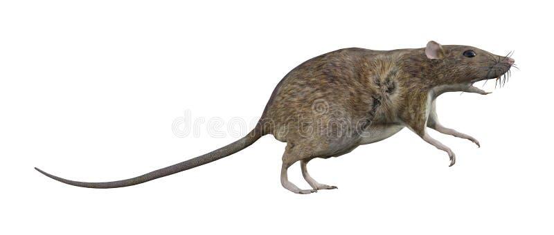 Bruine Rat op Wit vector illustratie