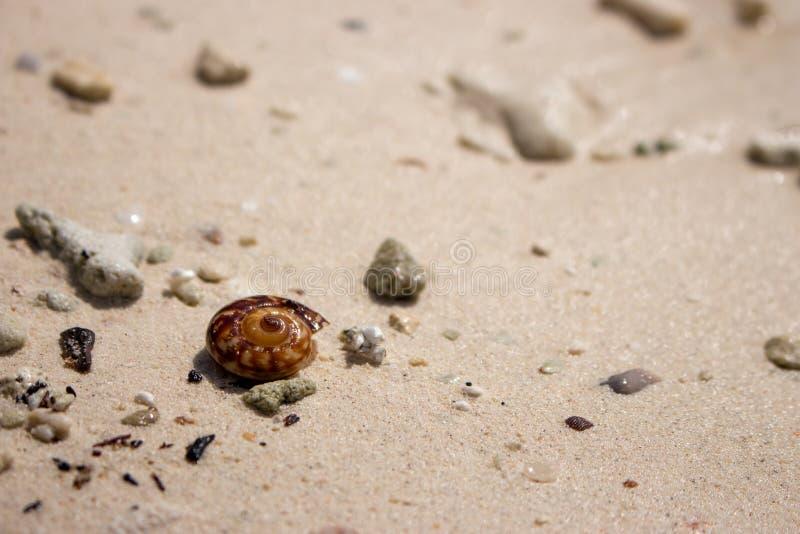 Bruine shell op wit zandstrand Kleine zeeschelp Tropisch aardvoorwerp Het oceaanwild stock foto